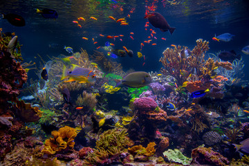 Tropical exotic fish and corals