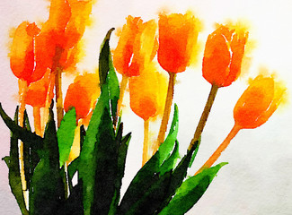 Watercolor painting of a vase of Tulips