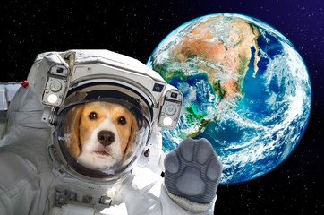 Dog astronaut in space on background of the globe. Elements of this image furnished by NASA.