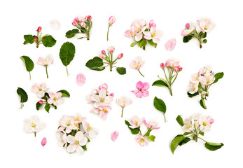 Flowers apple tree on a white background. Top view, flat lay