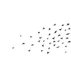 flock of flying birds vector illustration