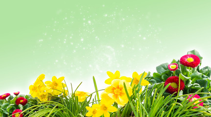 Frühlingswiese, Blumenwiese vor Bokeh Hintergrund hellgrün