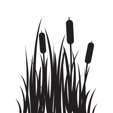 Carved silhouette flat icon, simple vector design. Cartoon grass with bulrush. Illustration for nature, flora, water plant, landscape and swamp