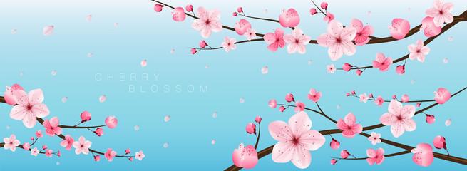 cherry blossom realistic vector, sakura,japan
