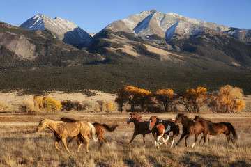 Running Horses with Mountain Backdrop
