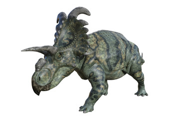 3D Rendering Dinosaur Albertaceratops on White