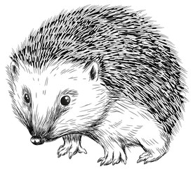 Niedlicher Igel - Vektor-Illustration