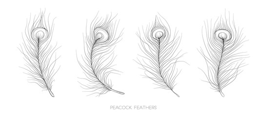 Pavonine Feather peacock bird vector hand drawn designer elements set collection. Monochrome Black gray ink pen linear drawings in boho style for design textile. Beautiful, elegant, romantic selection