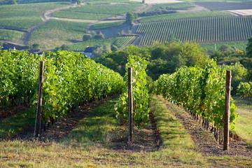 Vigne en Anjou > Maine et Loire > France