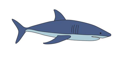 Blue shark on white background