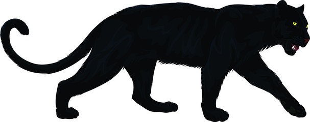 vector black panther