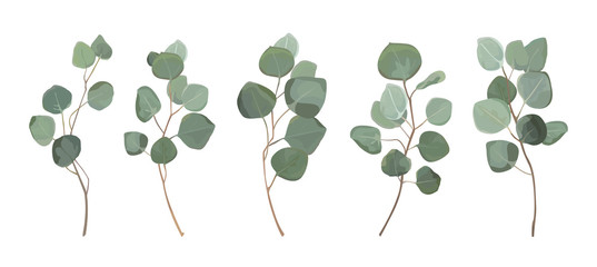 Eucalyptus silver dollar greenery, gum tree foliage natural leaves & branches designer art tropical elements set bundle hand drawn in watercolor style. Vector decorative beautiful elegant illustration