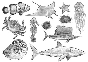 Marine animals collection illustration, drawing, engraving, ink, line   art, vector
