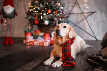 Dog holiday, Christmas and New Year