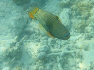 Fisch Unterwasser Tier Meer Ozean Tauchen Schnorcheln
