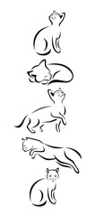 A Set Of Cats In Different Poses