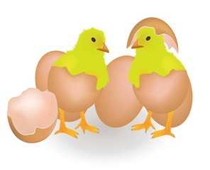 Two chickens coming from eggshell, vector