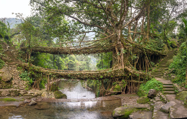 Living roots bridge near Nongriat village, Cherrapunjee, Meghalaya, India. This bridge is formed by training tree roots over years to knit together.