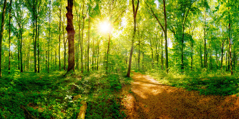 Fototapete - Path through a spring forest in bright sunshine