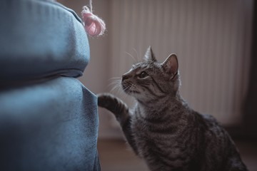 Curious pet cat looking at the ball of wool
