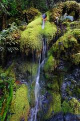 Moss Waterfall, Mason County, Washington, 2017