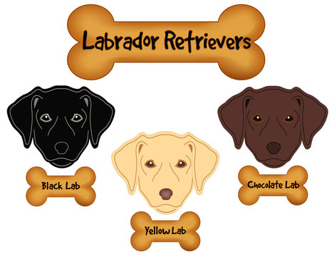 Labrador Retrievers,  Black, Chocolate, Yellow Labs, Dog Bone Treats