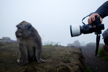 A man takes pictures of a macaque. She wearily turns her head to the side. Concept of travelling photography
