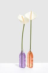 Anthurium Gels