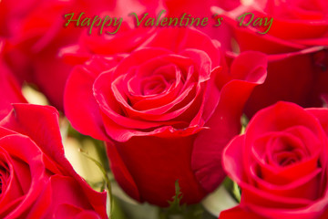 valentines congratulation with bouquet of red roses