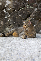 Summer afternoon, rest in the stone wall, sleeping cat