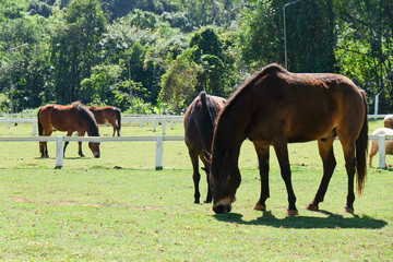 Horses on the Farm, Grazing horses