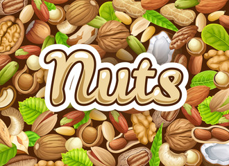 Background of nuts. Food grains of cashew and brazilian nut, coconut and cedar, hazelnut and cashew, almonds and walnut, nutmeg and pecan, peanut and macadamia, pistachio.