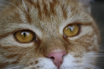 Garfield Look-alike, Close-up