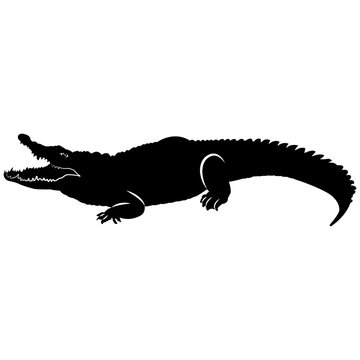 Vector image of a crocodile silhouette with an open mouth on a white background