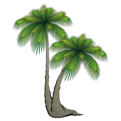 Cartoon palm tree.