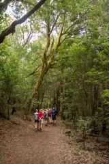 Wanderer im Lorbeerwald auf la Gomera