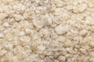 Sheep fur. Wool texture. Closeup background Wall mural