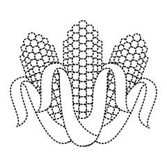 three corn grain food nutrition agriculture vector illustration