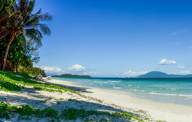 View of a tropical beach with blue sky in sunny day