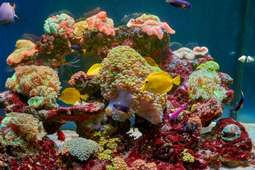 Papiers peints Sous-marin fishes and other fauna of coral reef