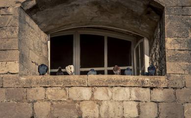 window with pigeons Dubrovnik