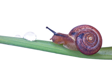 A snail and a drop of dew