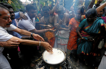 Tamil devotees cook pongal during the Tamil harvest festival of Thai Pongal at a Hindu temple in Colombo