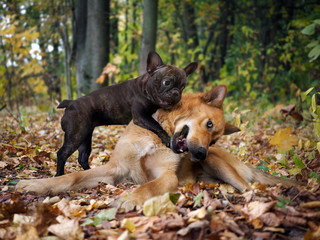 Dogs playing in the autumn forest