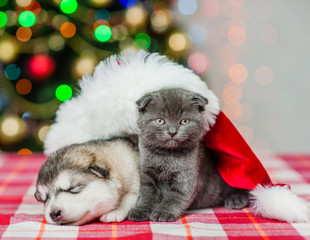 Cat and sleeping dog in red christmas hat on a background of the Christmas tree