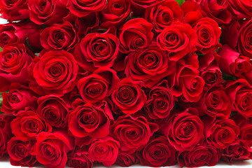 Deurstickers Roses Red roses