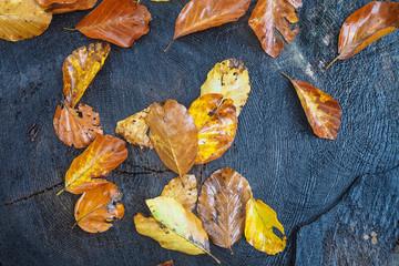 Herbstliches Buchenlaub auf einem Baumstumpf