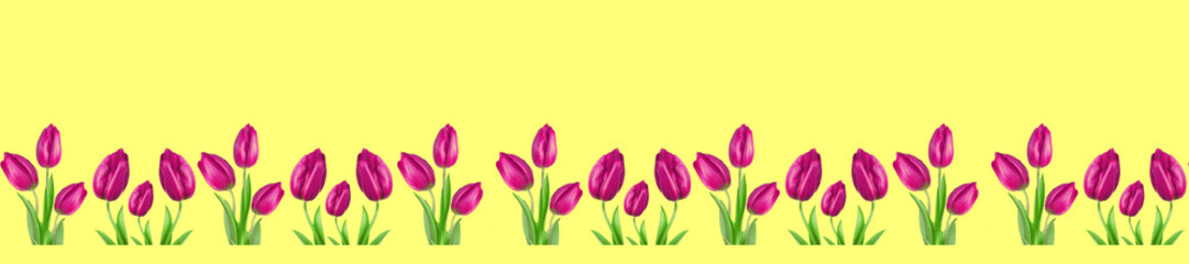 Wall Mural -  panorama patern pink purple tulip on a bright yellow background