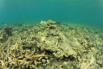 Dead reef due to coral bleaching, global warming, climate change