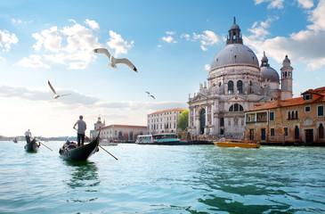 Cadres-photo bureau Venice Gulls over Grand Canal